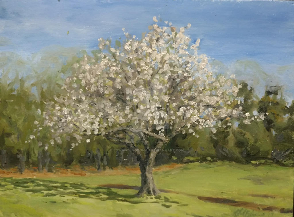 apple tree @ Gore estate. 2 hours plien aire by EdwardBagdonas