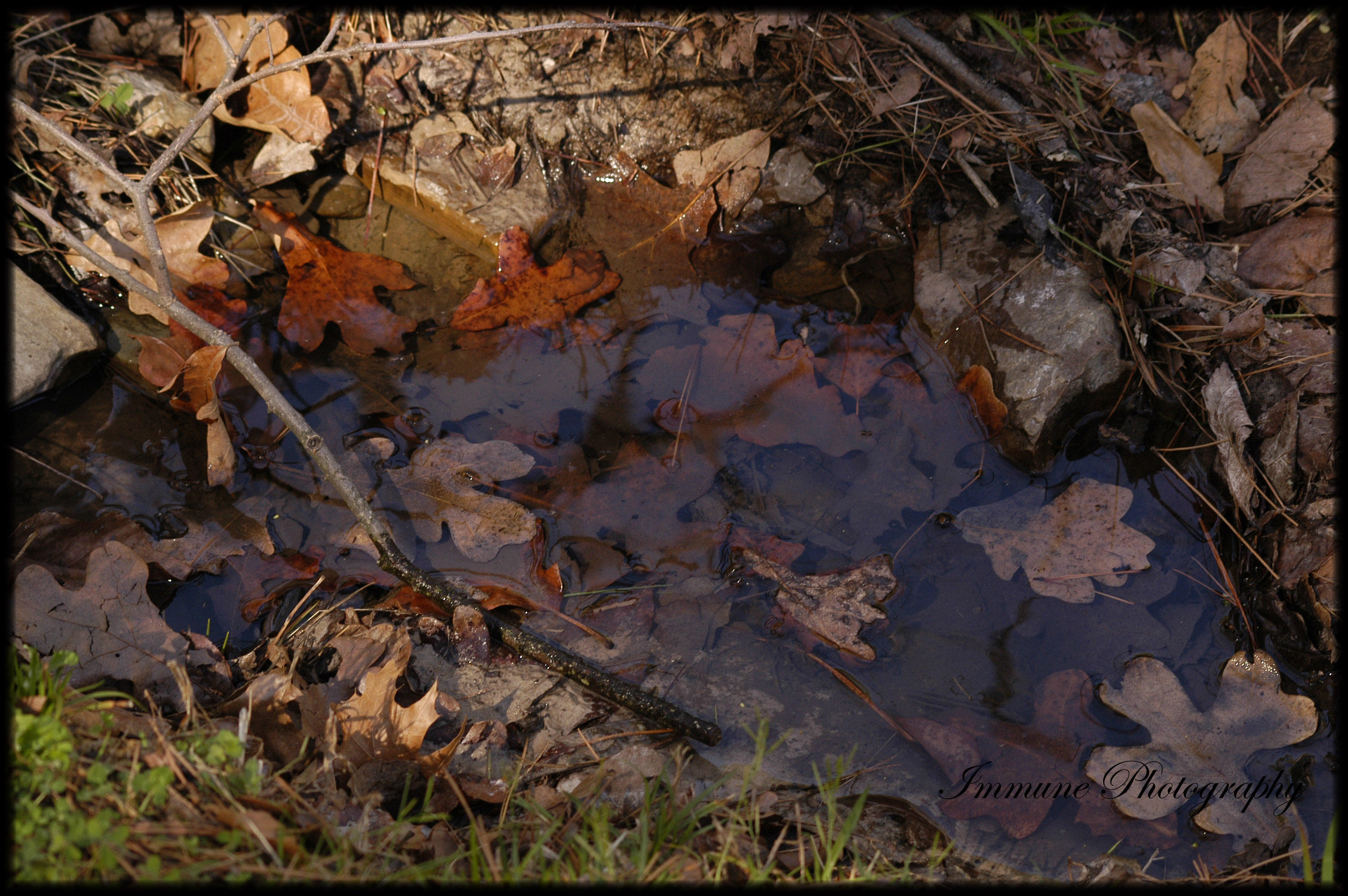 Puddle by sugarchaos