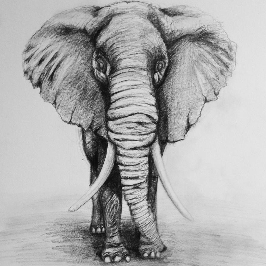 Elephant drawing by G-freak on DeviantArt: g-freak.deviantart.com/art/Elephant-drawing-333775266