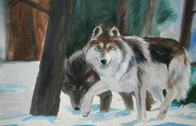 old wolves