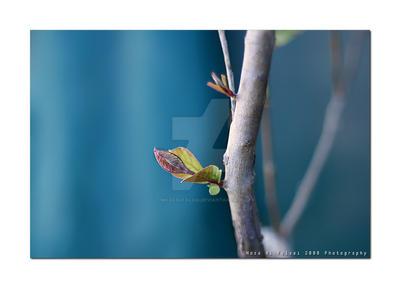 New life by MozaAlFalasi