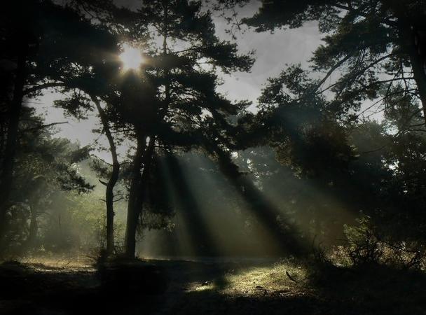 Sunrise by GaiusNefarious