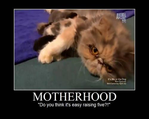 Motherhood Motivational