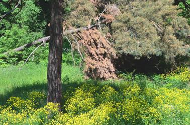 Czy pamietasz, jak glowe wynurzyles z boru? by Arte22