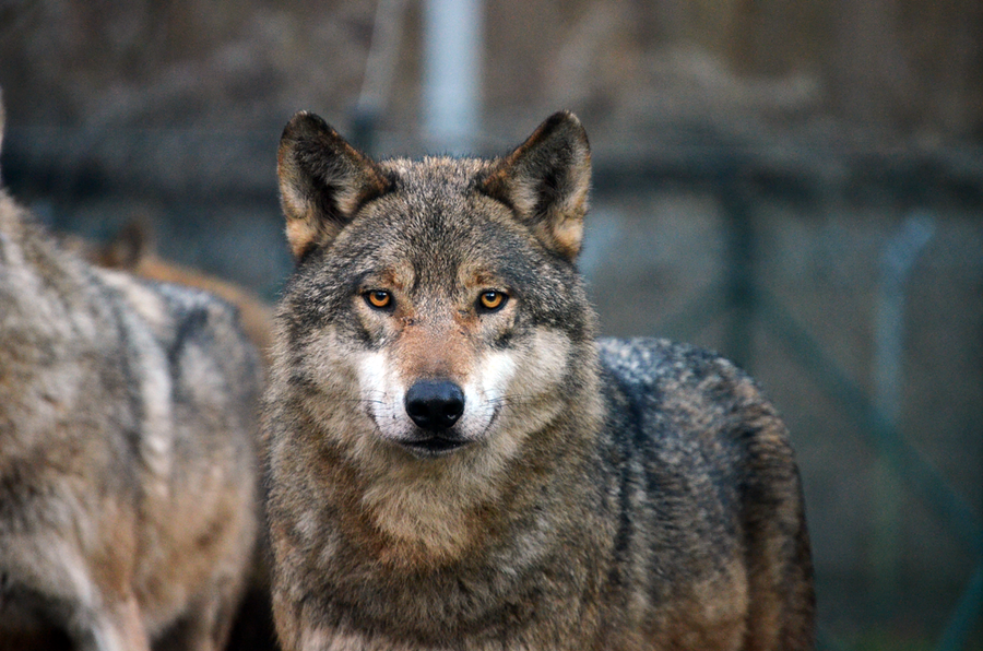 A fire inside by KiwiProductions
