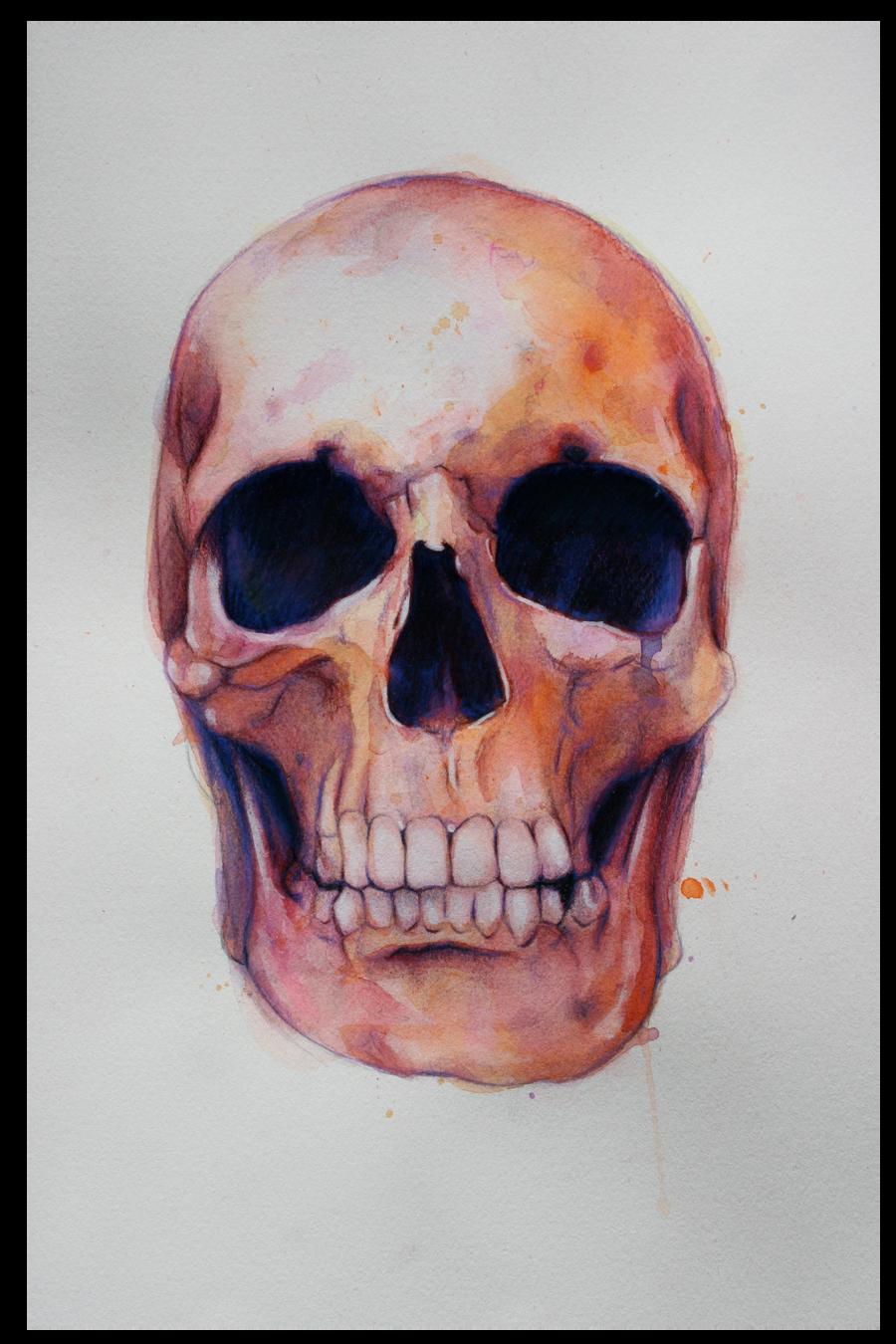 Skull Study by shawnie-b
