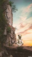 Meditation Dog Photo Manipulation Photoshop