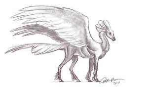 Pegasus Sketch