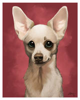 Rico the Chihuahua by CharReed