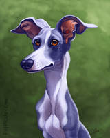 Marley the Italian Greyhound by CharReed
