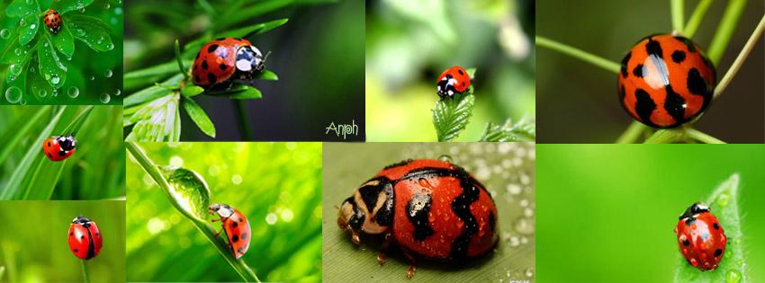 Cv Ladybug by anph93