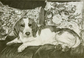 Muttsky - our pet beagle by noeling