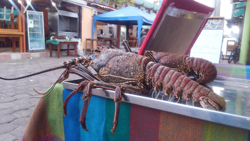 Lobsters For Sale by bugg08