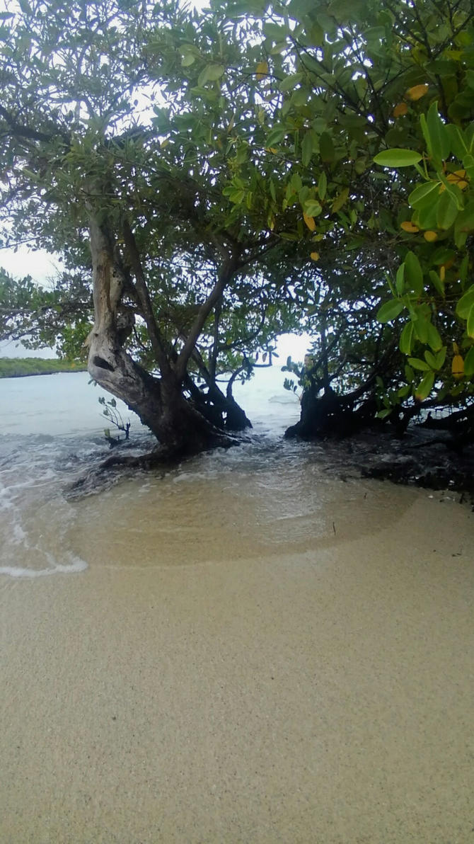 From Betwixt the Mangroves by bugg08