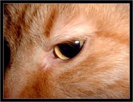 cats eye by Ron-Douglas