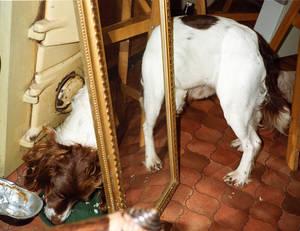 Mirrored Dog.