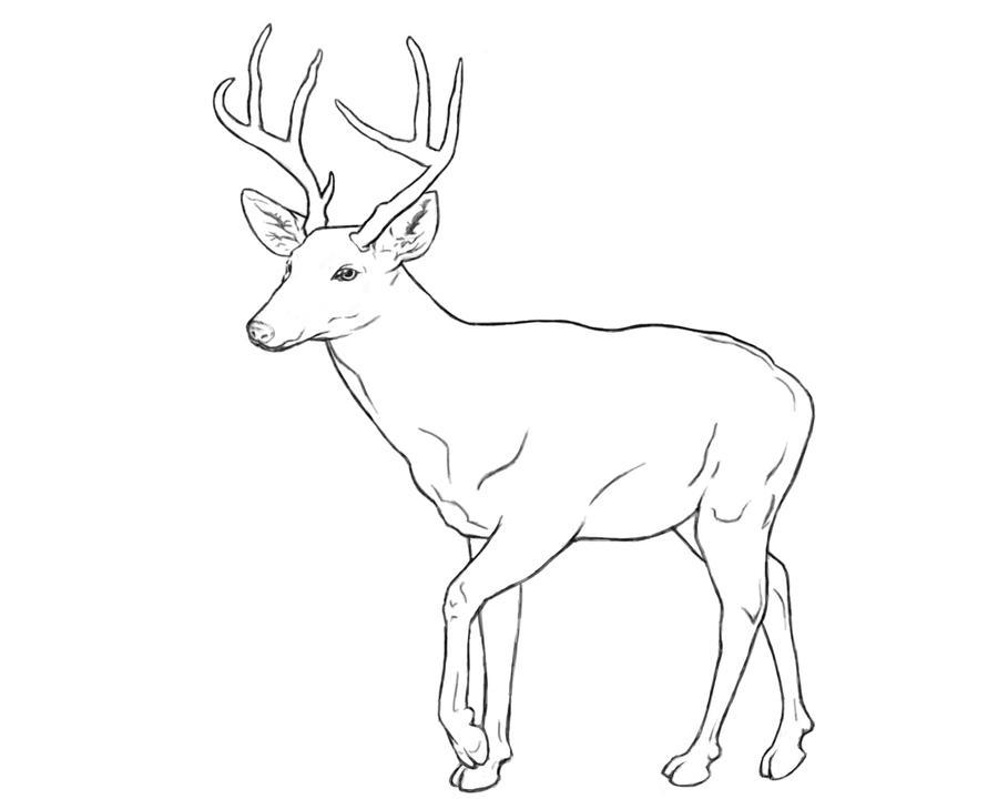 Line Drawing Deer : Deer line drawing car interior design