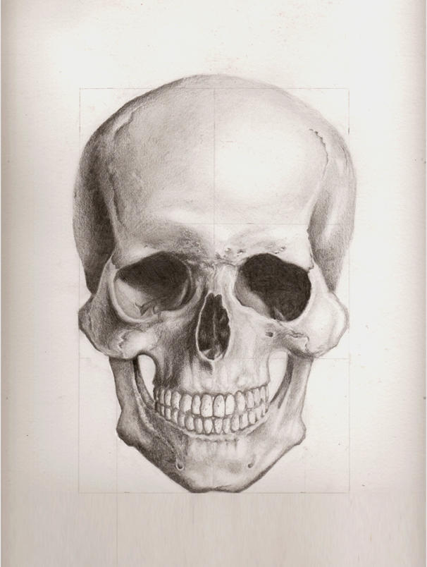 Human Skull Front View By Enonemis1 On Deviantart