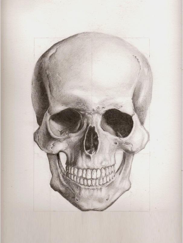 Human Skull Front Draw...