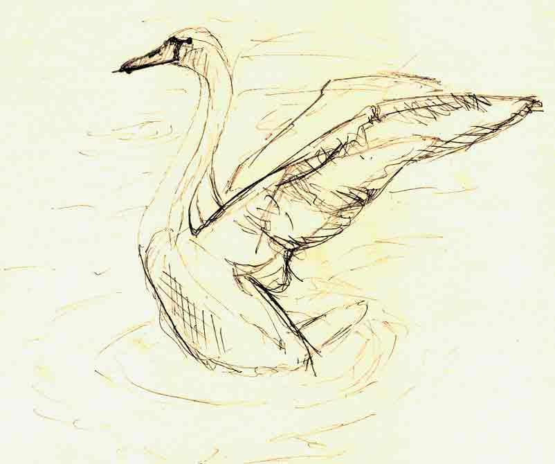 how to draw a realistic swan