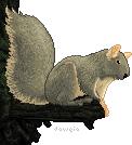 Squirrel by Daweia