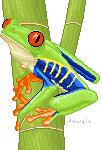 Red-Eyed Tree Frog by Daweia
