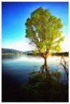 Tree in lake by GDALLIS