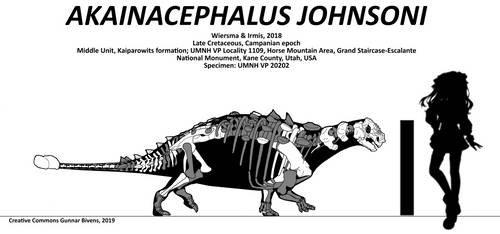 Akainacephalus johnsoni Skeletal by bricksmashtv