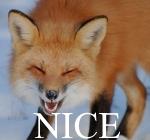 mrNiceFox by ReaderNo31142