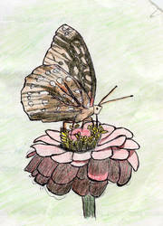 Butterfly in color by psycholee
