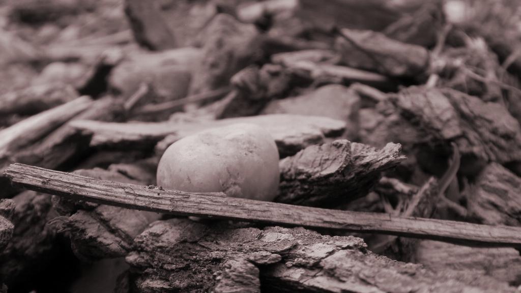 Pebble by taklertamas