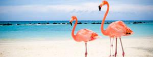 Mulit Display - Pink Flamingo