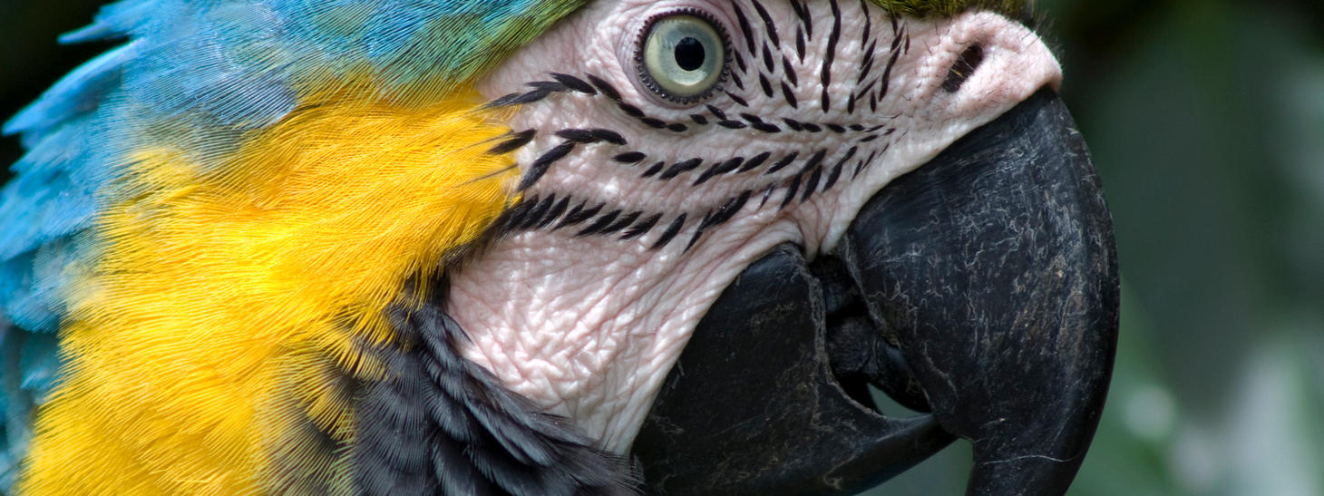 Multi Display - Parrot - by Mezmorizingmage
