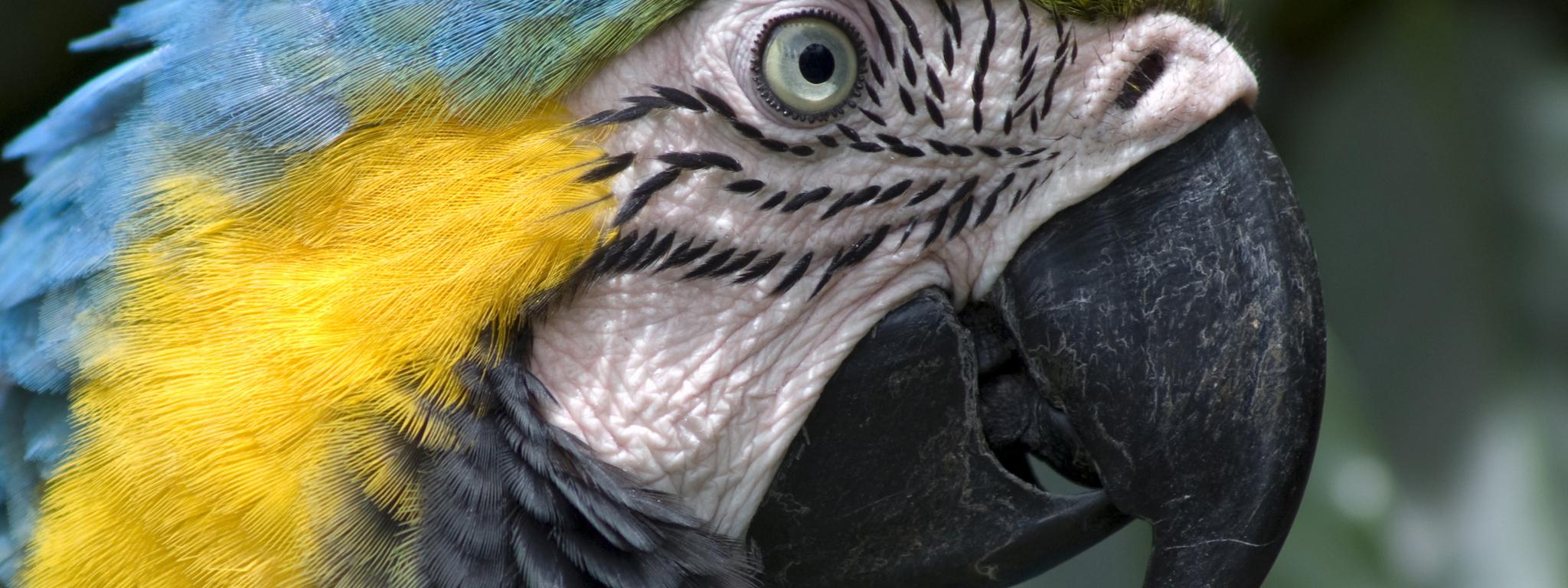 Multi Display - Parrot -