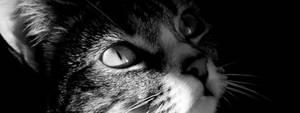 Multi Display - Cat Closeup