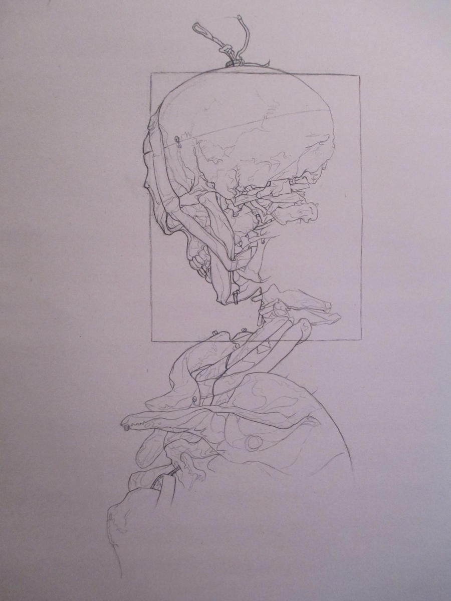 Contour Skeleton Two by tree27