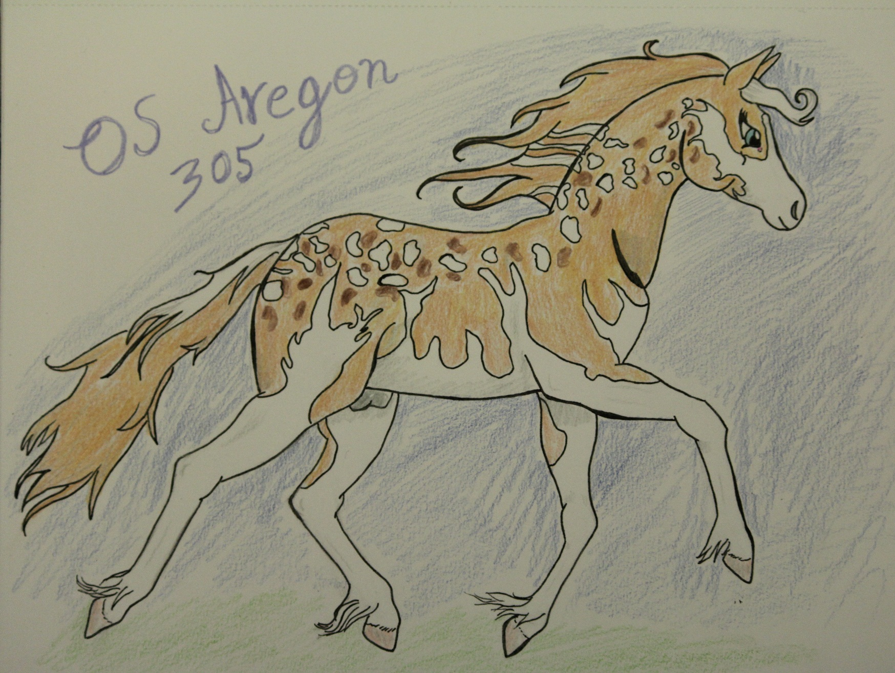 OS Aregon 305* - official ref by Nuuhku87