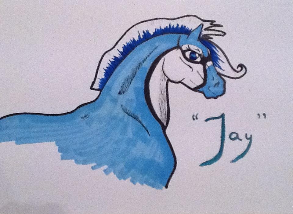037 RH Blue Jay by Nuuhku87