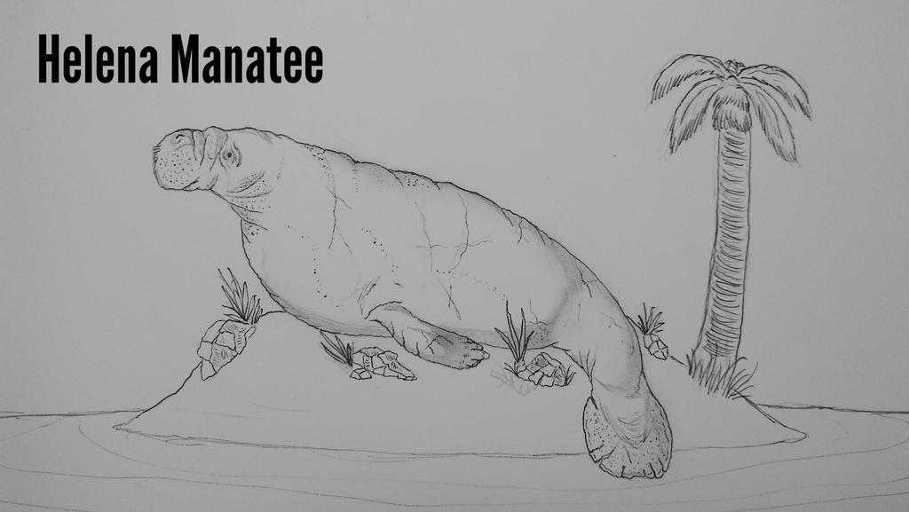 COTW#188: Helena Manatee by Tr...