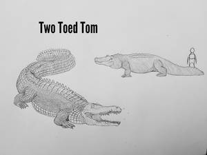 COTW#250: Two Toed Tom