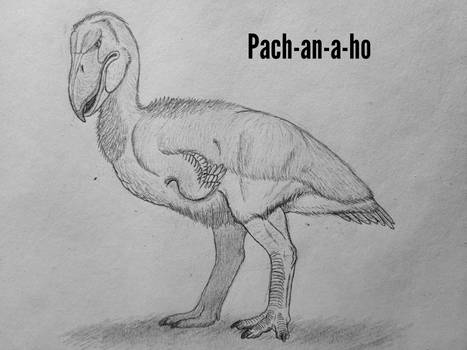 COTW#286: Pach-an-a-ho