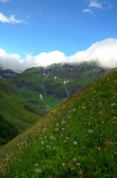 The Alpine Meadow