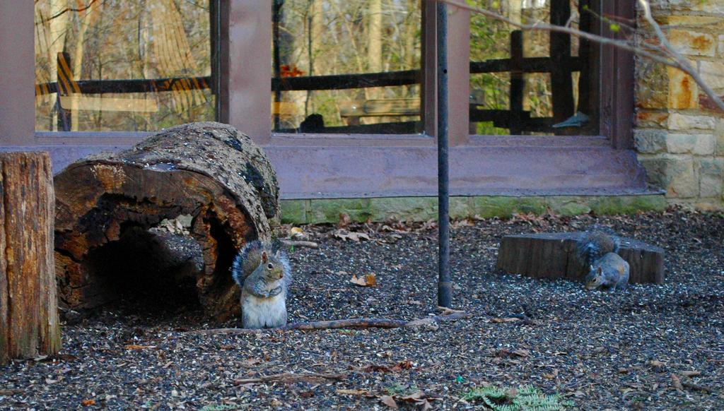 Brecksville Nature Center Internships