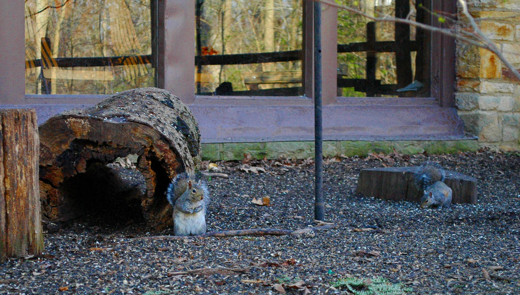 Brecksville Nature Center Animal Crackers