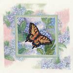 Swallowtail on Hydrangea