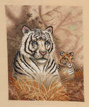 Tigers in Grass