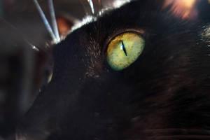 Absinthe Eyes Redux