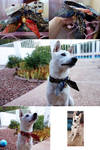 Three Dogs Collars for Riceball