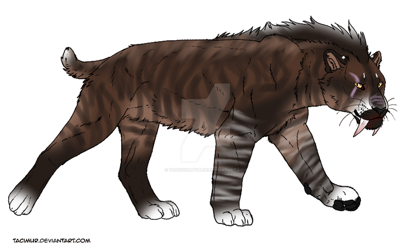 saber tooth Saber-toothed tiger definition, any of several extinct members of the cat family felidae from the oligocene to pleistocene epochs, having greatly elongated, saberlike.