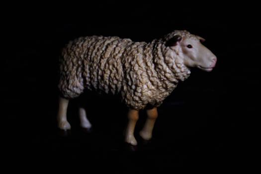 Sheep Toy